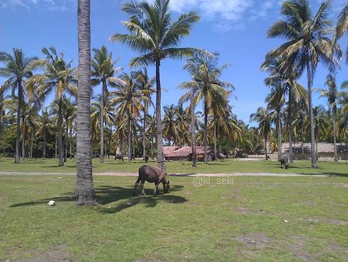 Novotel-lombok