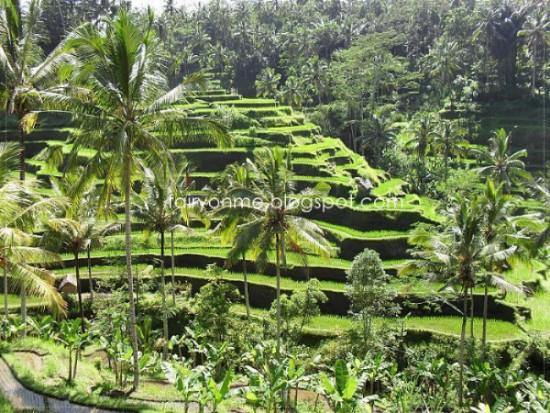 tegalalang-ubud