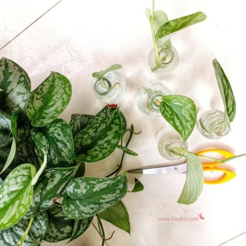 hobi-menanam-tanaman-hias